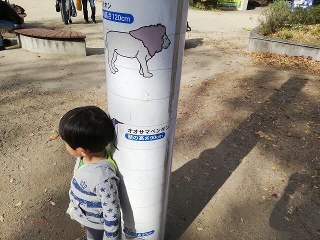 動物と背くらべ